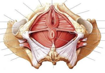 産後は骨盤底筋群を鍛えて尿漏れを改善しよう!